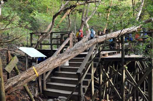縄文杉を眺めるステージ